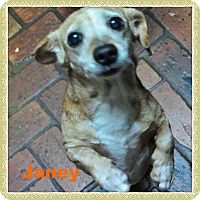 Adopt A Pet :: Janey - Green Cove Springs, FL