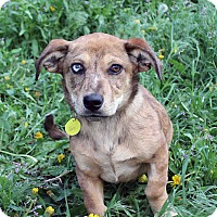 Adopt A Pet :: Zala - Westminster, CO