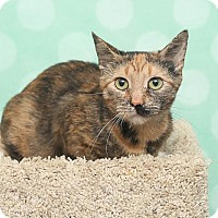Domestic Shorthair Cat for adoption in Chippewa Falls, Wisconsin - Ginger