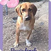 Adopt A Pet :: Bessie - Allentown, PA
