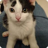 Adopt A Pet :: Liberty - Merrifield, VA