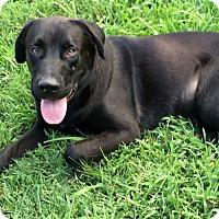 Adopt A Pet :: Frank - Potomac, MD