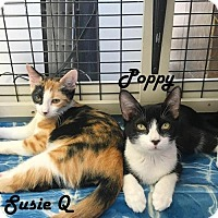 Adopt A Pet :: Susie Q and Bear - Redwood City, CA