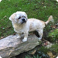 Adopt A Pet :: Billy - Sharon Center, OH