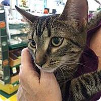 Adopt A Pet :: Leia - Lombard, IL