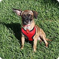 Adopt A Pet :: Dino - Apple Valley, UT