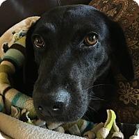 Adopt A Pet :: Maggie Mae - Houston, TX