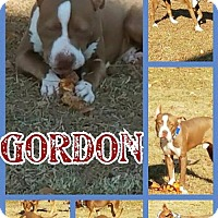 Adopt A Pet :: Gordon - Willingboro, NJ