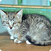 Adopt A Pet :: Cheeta - San Antonio, TX