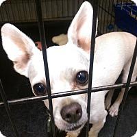 Adopt A Pet :: Christopher - Ogden, UT