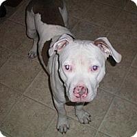 Adopt A Pet :: Pinki (Courtesy Post) - Atlanta, GA