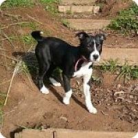 Adopt A Pet :: Pearl ACCEPTING ADOPTION APPS - Sacramento, CA