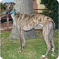 Adopt A Pet :: Jack - Carlsbad, CA