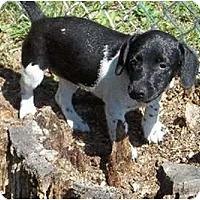 Adopt A Pet :: Fiscella - Albany, NY