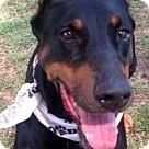 Adopt A Pet :: ZELDA (video)