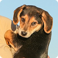Adopt A Pet :: *Jack - PENDING - Westport, CT