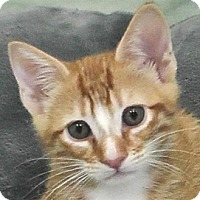 Adopt A Pet :: Opie - Redondo Beach, CA