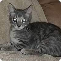Adopt A Pet :: Perdita - North Highlands, CA
