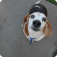 Adopt A Pet :: Dabi - Virginia Beach, VA