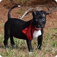 Adopt A Pet :: Pokey - Walton County, GA