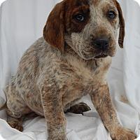 Adopt A Pet :: Deacon (8 lb) - Sussex, NJ