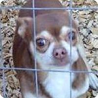 Adopt A Pet :: Choko - geneva, FL