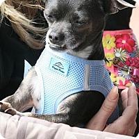 Adopt A Pet :: Miller - Las Vegas, NV