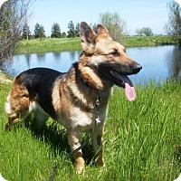 Adopt A Pet :: Adelle - Pleasant Grove, CA