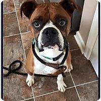 Adopt A Pet :: Oscar - Brentwood, TN