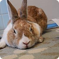 Adopt A Pet :: Alex - Brooklyn, NY