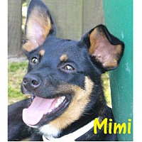 Adopt A Pet :: Mimi - Little Rock, AR