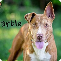 Adopt A Pet :: Marble - Joliet, IL