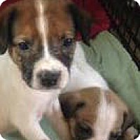 Adopt A Pet :: Stripes - Barnegat, NJ