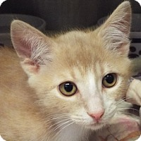 Adopt A Pet :: Lincoln - Grants Pass, OR