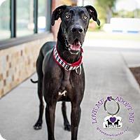 Adopt A Pet :: Hansel - Huntersville, NC