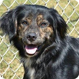 Border Collie/Shepherd (Unknown Type) Mix Dog for adoption in Athens, Georgia - Maggie