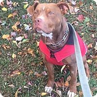 Adopt A Pet :: Penny - Unionville, PA