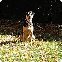 Adopt A Pet :: Riley (pending adoption) - Montreal, QC