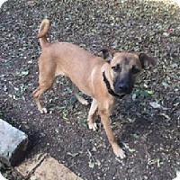 Adopt A Pet :: Florence - Austin, TX