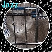 Adopt A Pet :: Jazz - Cedar Springs, MI