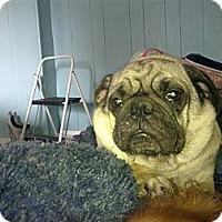 Adopt A Pet :: Michael - Cumberland, MD