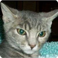 Adopt A Pet :: Alana - Reston, VA
