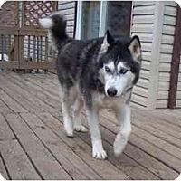 Adopt A Pet :: Shadow - Belleville, MI