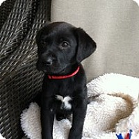 Adopt A Pet :: Serena - Marlton, NJ