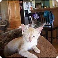 Adopt A Pet :: Hugo - Owasso, OK