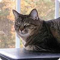 Adopt A Pet :: Carley - Monroe, GA