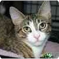 Adopt A Pet :: Junior & Mooshi - Lake Ronkonkoma, NY