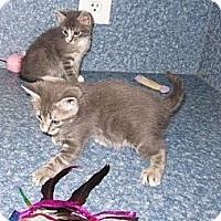 Adopt A Pet :: Clint - Harrisburg, NC