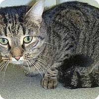 Adopt A Pet :: Taz - Hamburg, NY