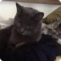 Adopt A Pet :: Allie - Sanford, ME